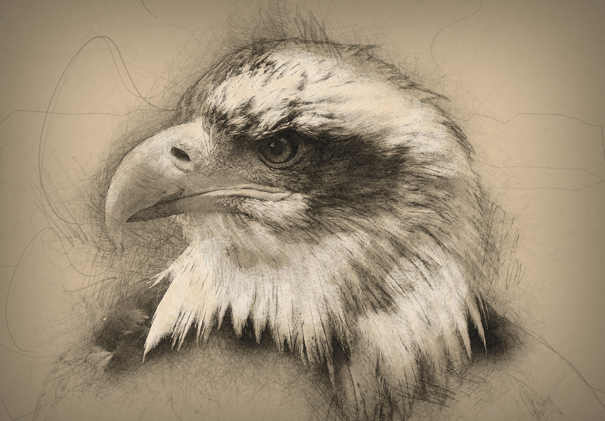 Painted Bald Eagle by Brigitte Werner