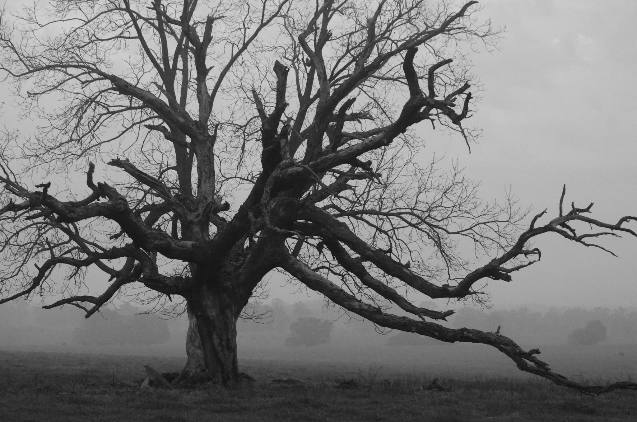 Mystery Tree by Doreen Leone