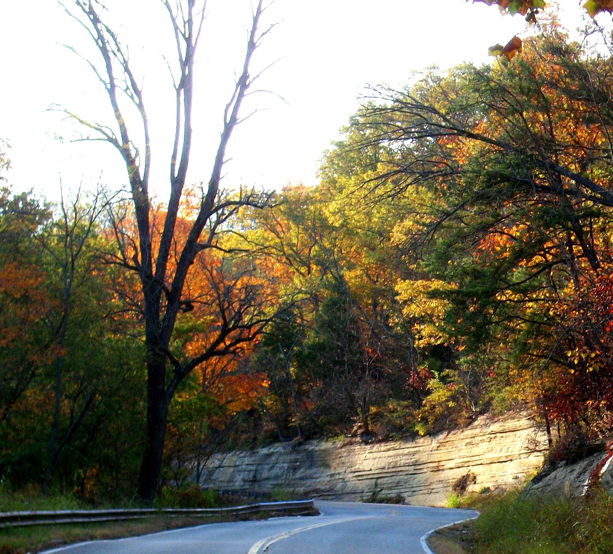 Fall color by Donna Creadon
