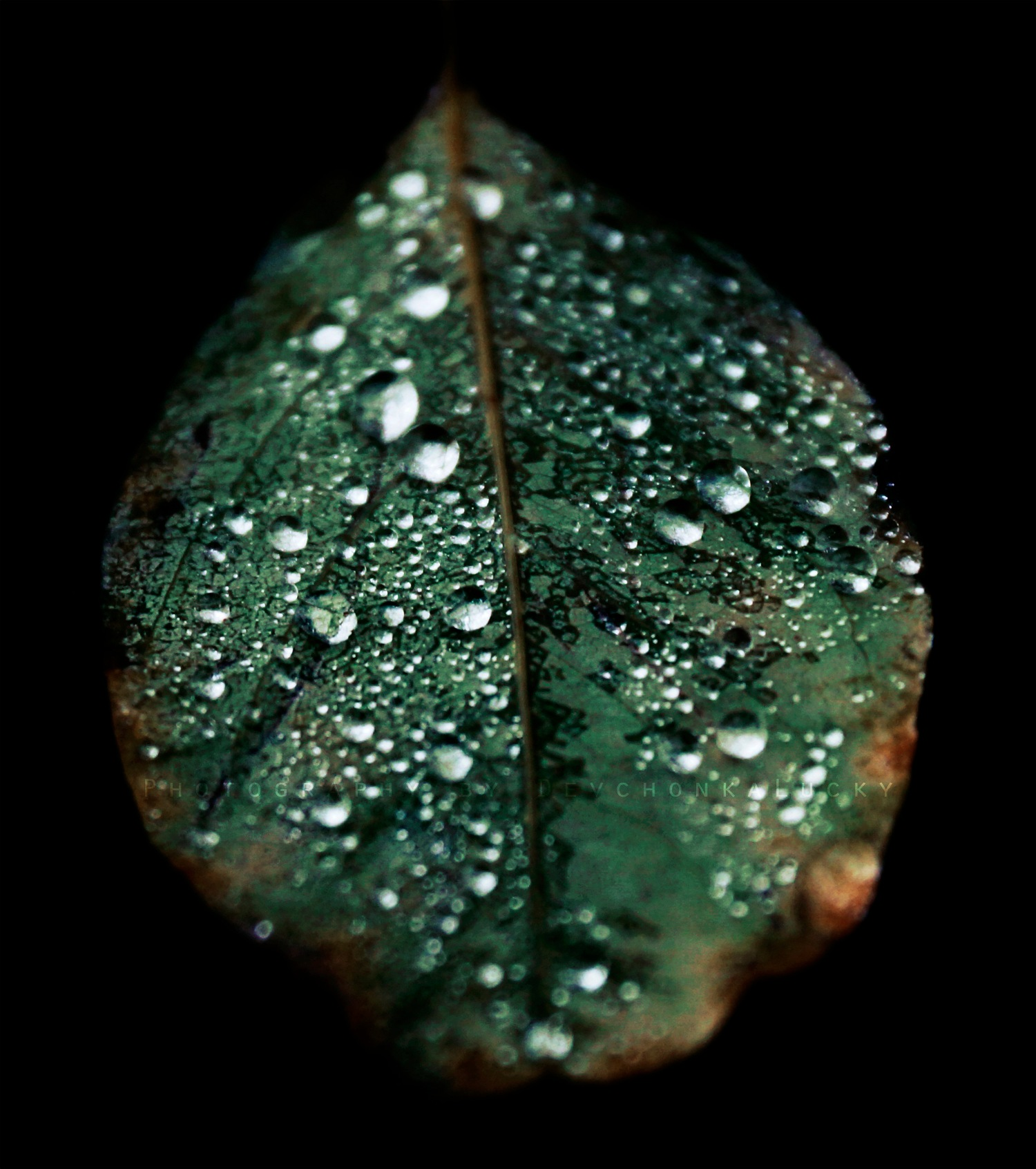 Sparkling Leaf by Devchonka Lucky