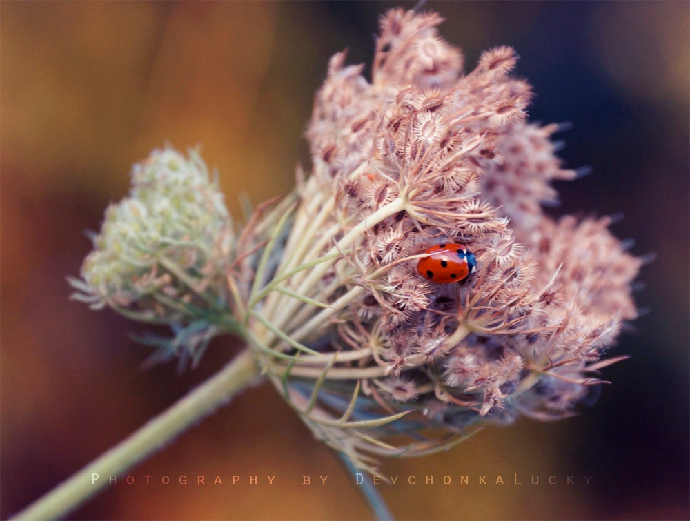 Small Red Thing by Devchonka Lucky