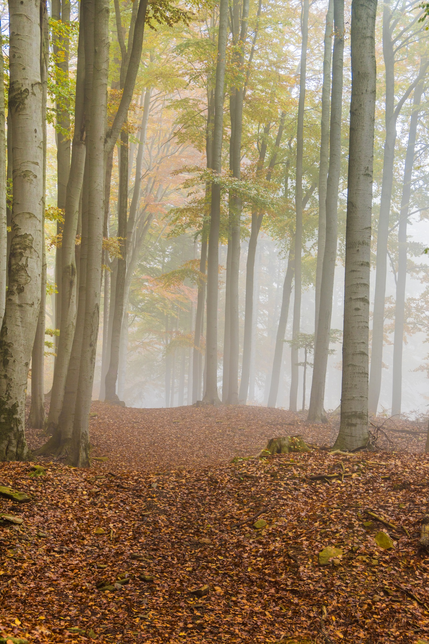 Light forest III by Dagmar Germaničova