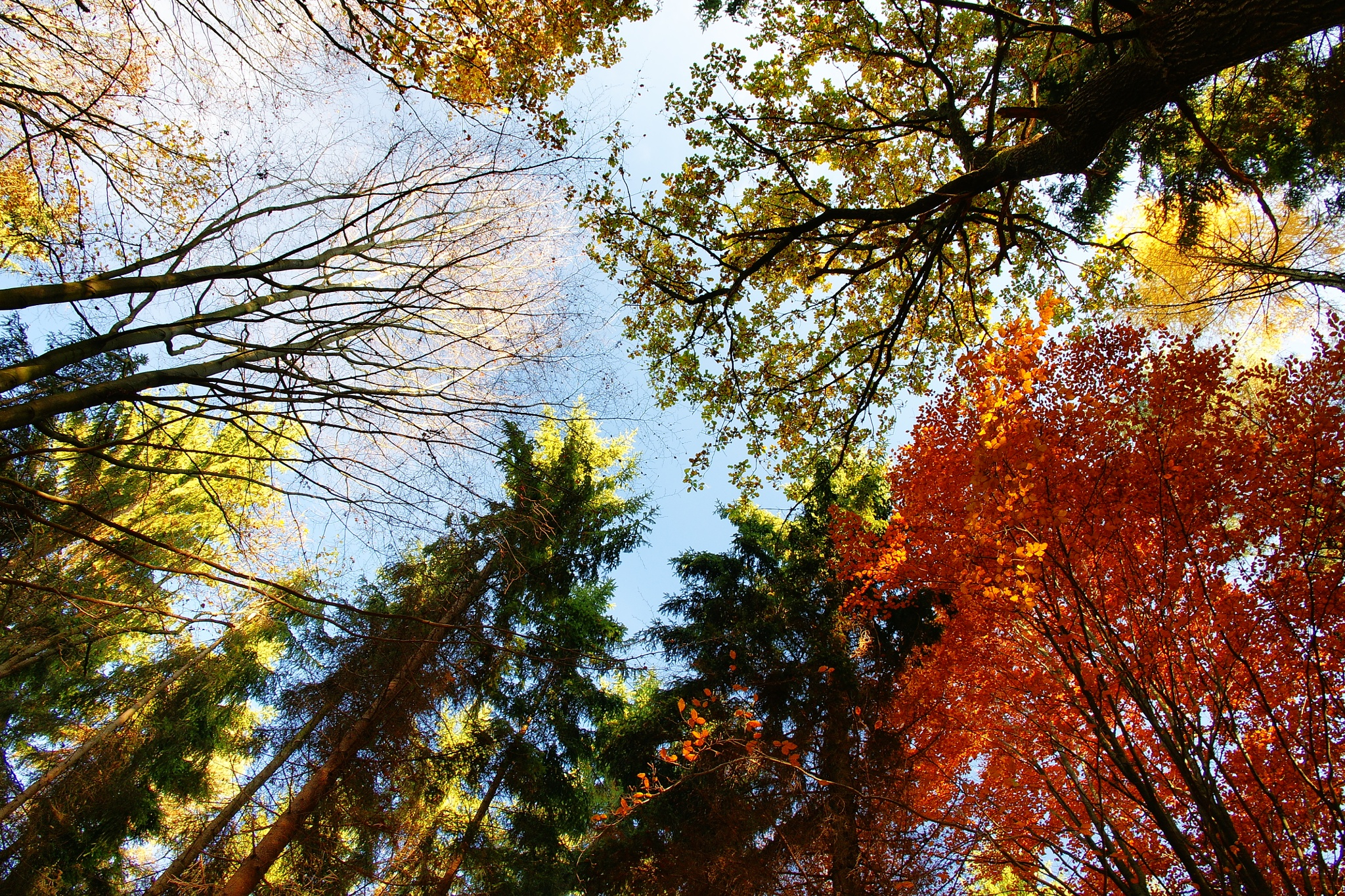 I love trees II by Dagmar Germaničova