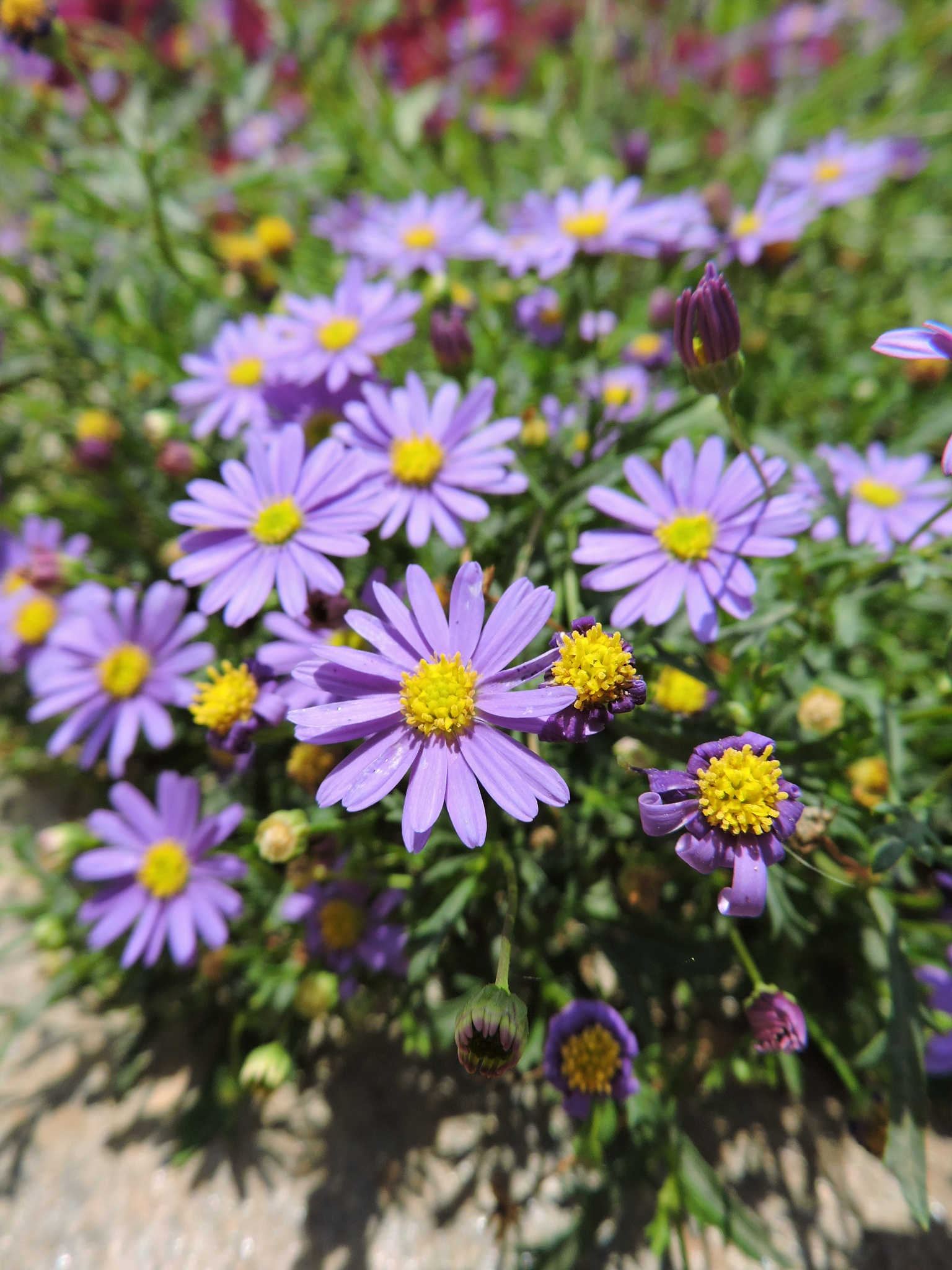 Flowers by DORUK