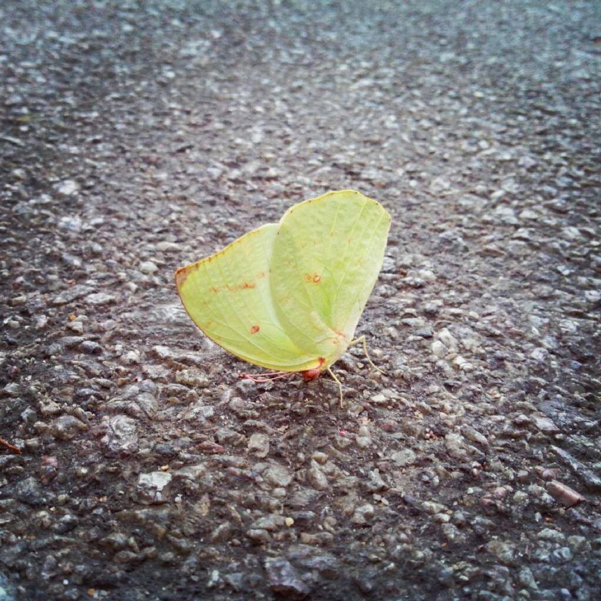 Butterfly  by Vidya Rada