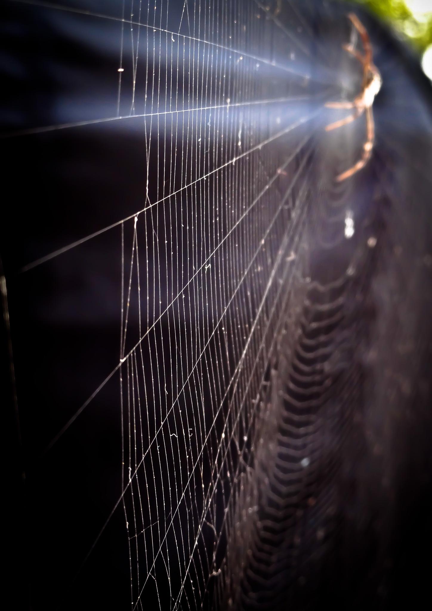 spider web by Vidya Rada