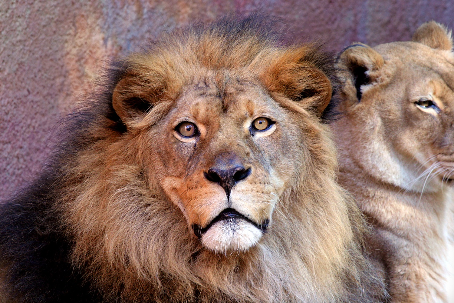 A Contented King by Carl Main