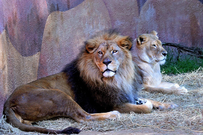 Royalty by Carl Main