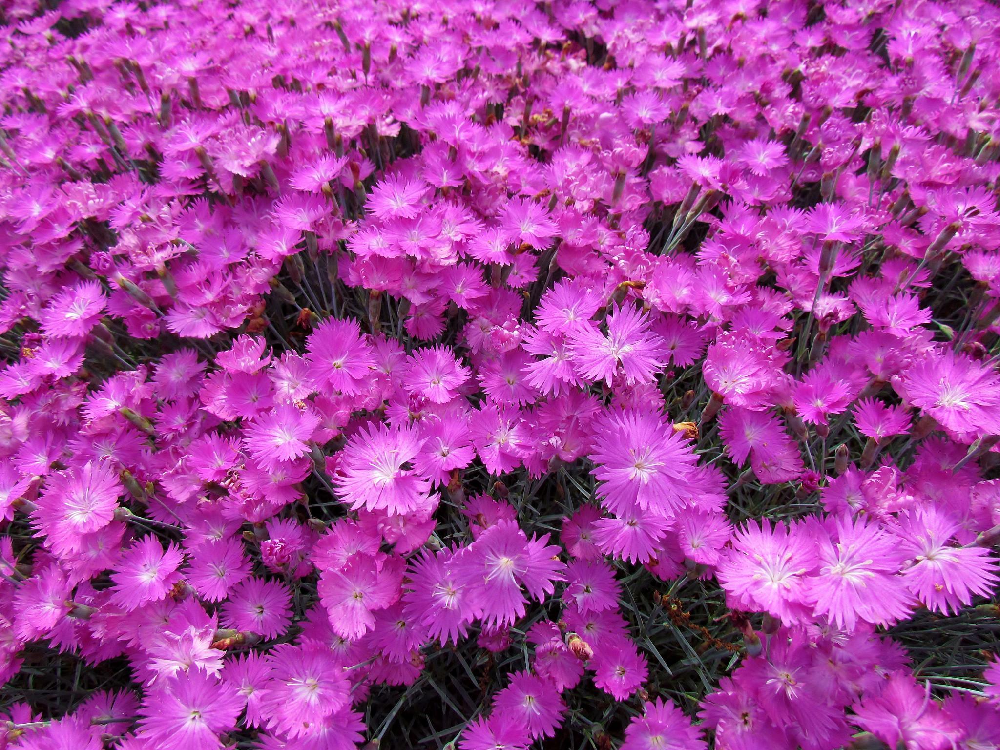 Flower in Bloom by Christine Keaton