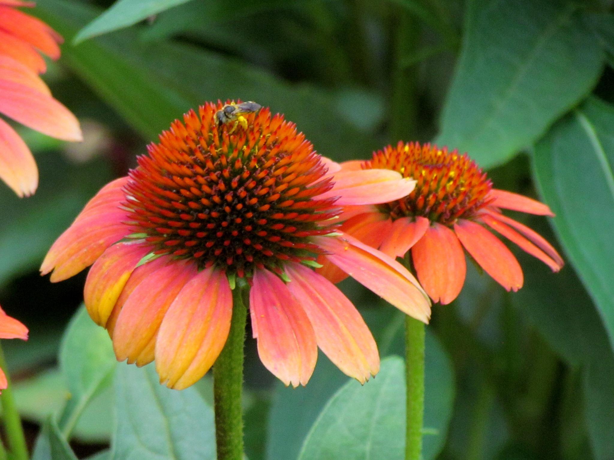Beauty in Flowers by Christine Keaton