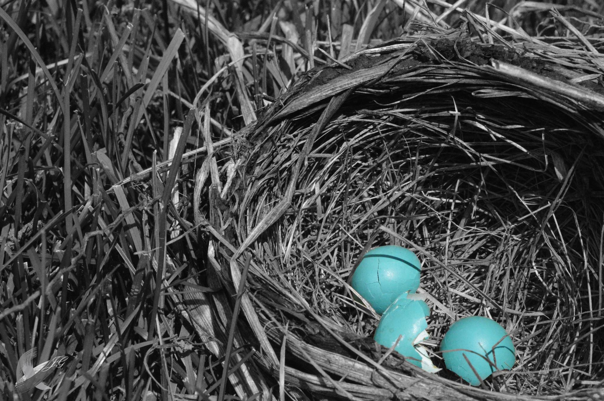 Robbins Egg Blue by JessicaGreenslade