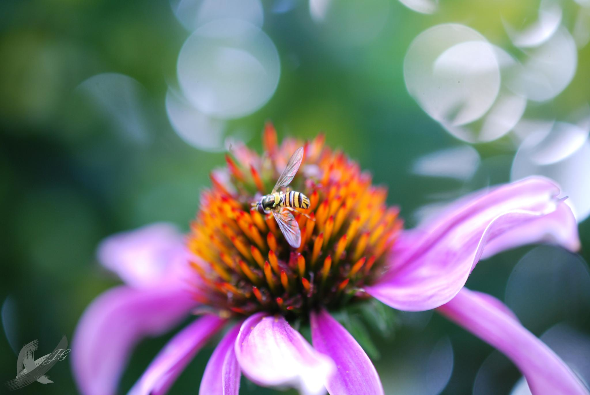 Bee by JessicaGreenslade