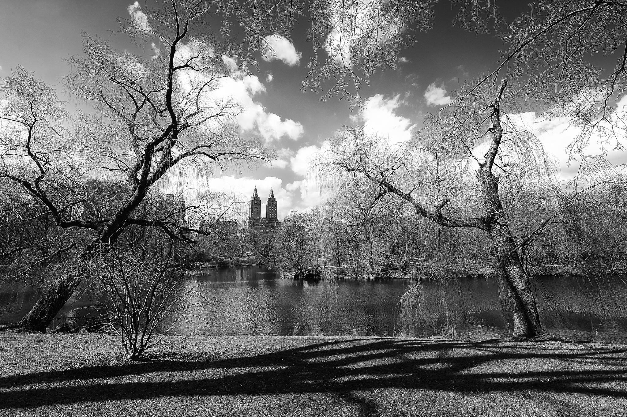 central park by Giovanni Pisotti