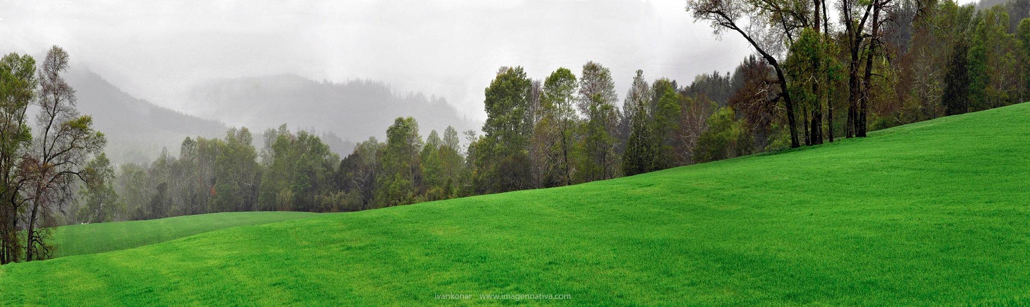 green diagonal by ivankonar