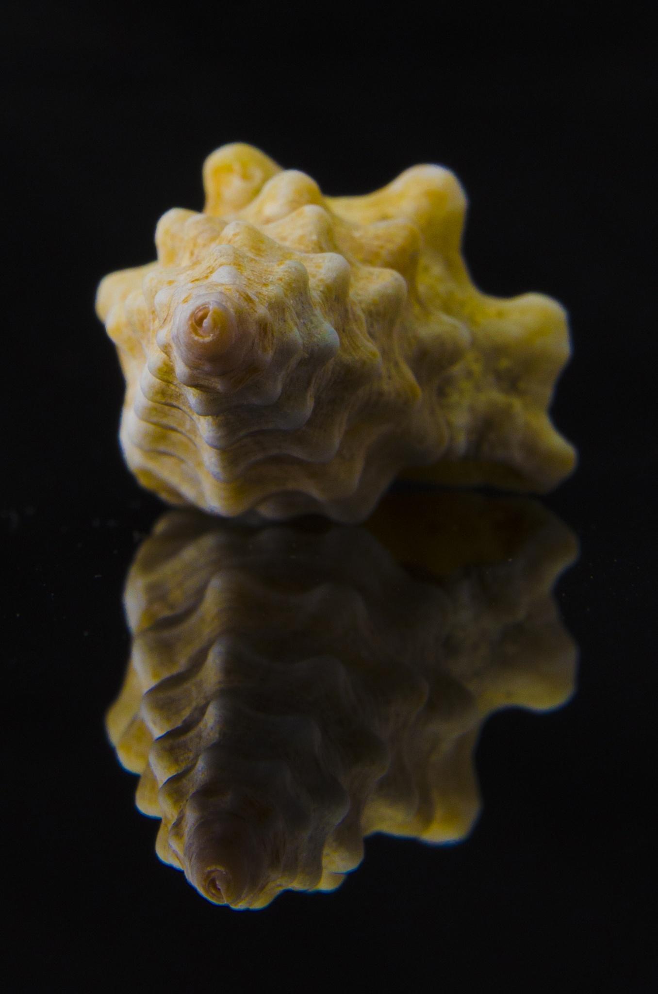 Shellfish Yellow by Wael Saeed