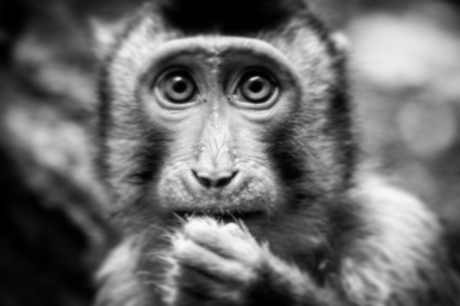Little monkey black and white  by RegienQD