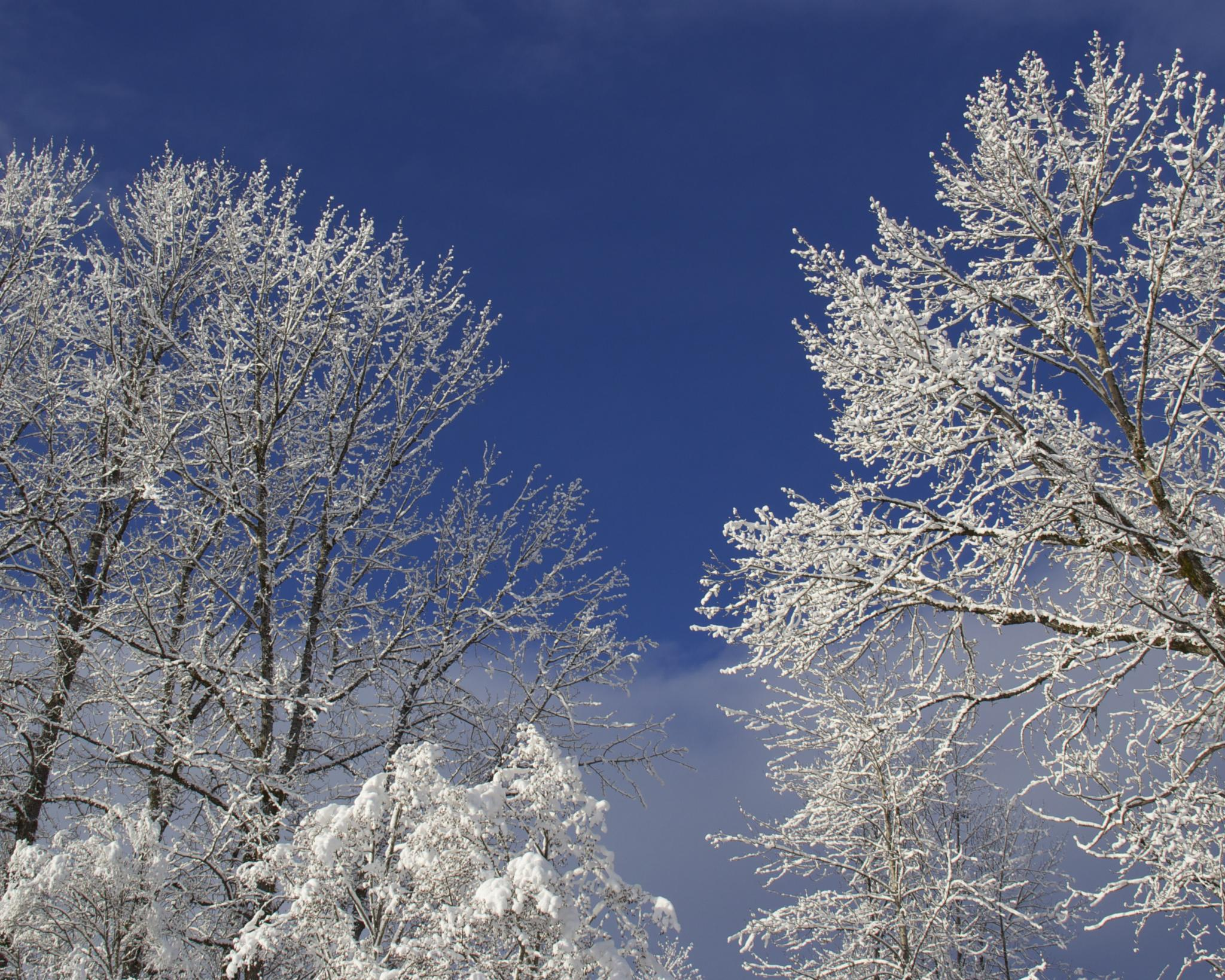 Photo in Landscape #sky #winter #snow #trees
