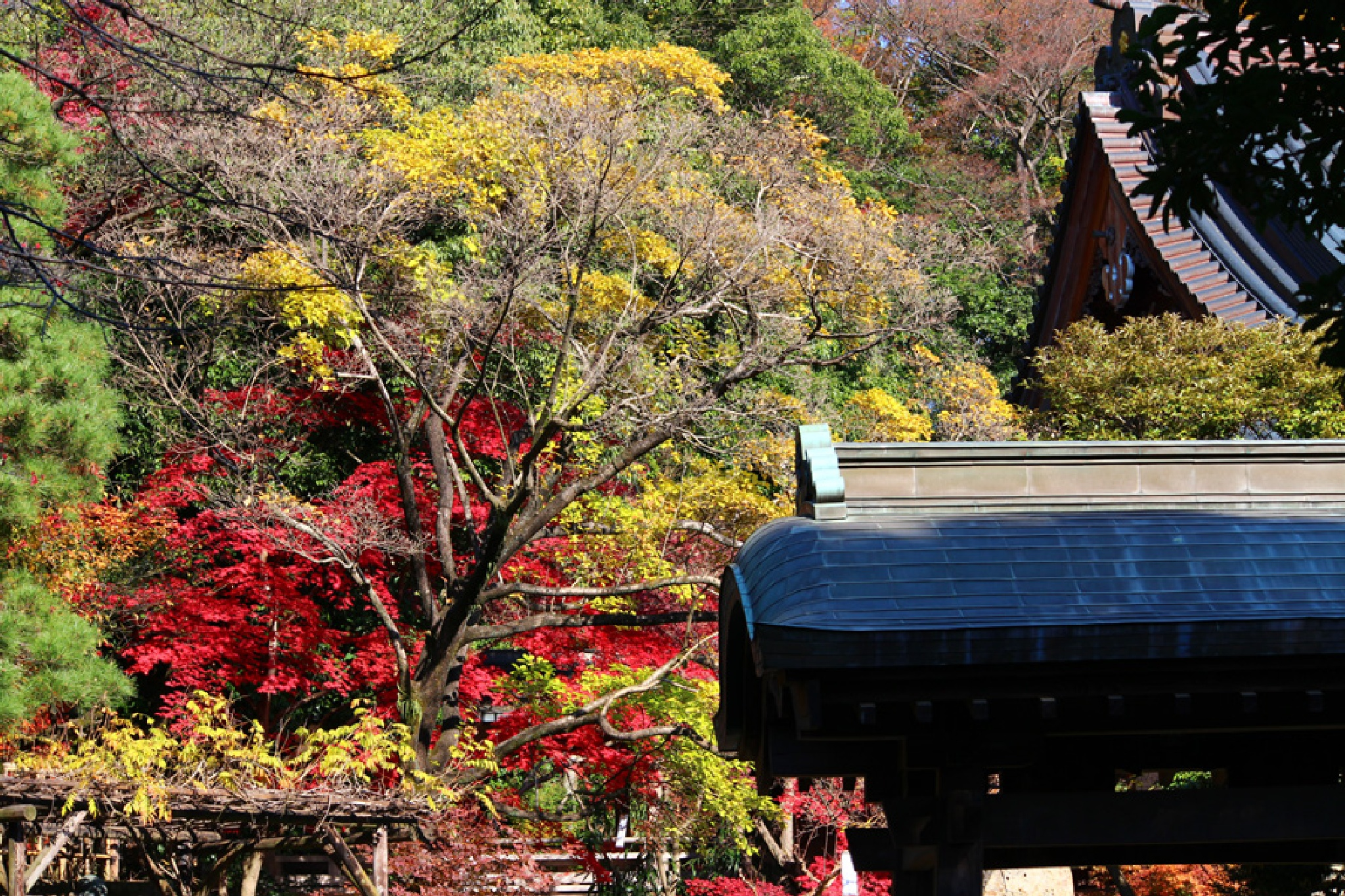 autumn scenery of temple by K-Style Photo