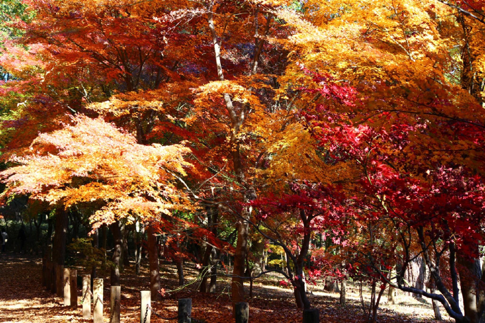 autumn burning by K-Style Photo
