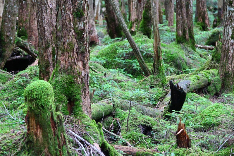 moss forest. by K-Style Photo