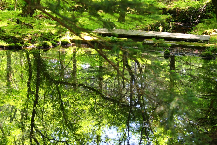 garden pond with trees green. by K-Style Photo