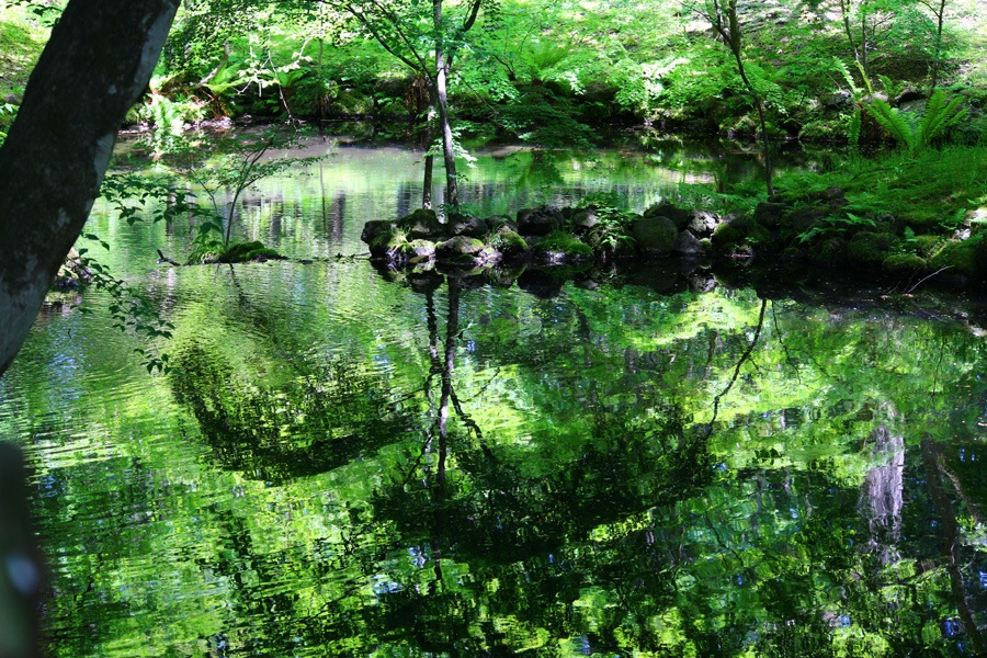 cool green pond. by K-Style Photo