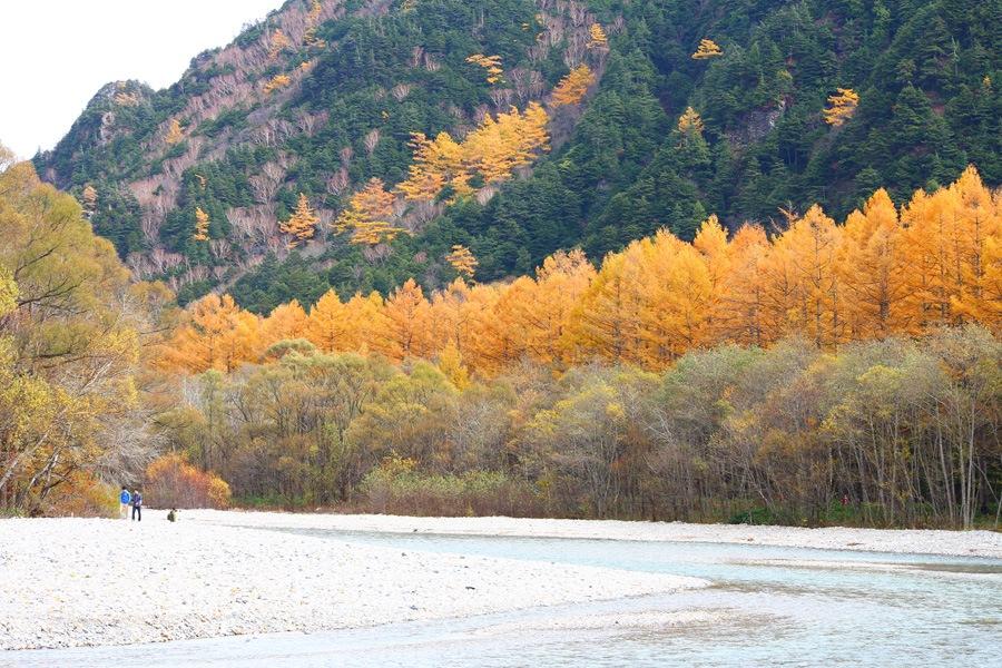 yellow autumn. by K-Style Photo