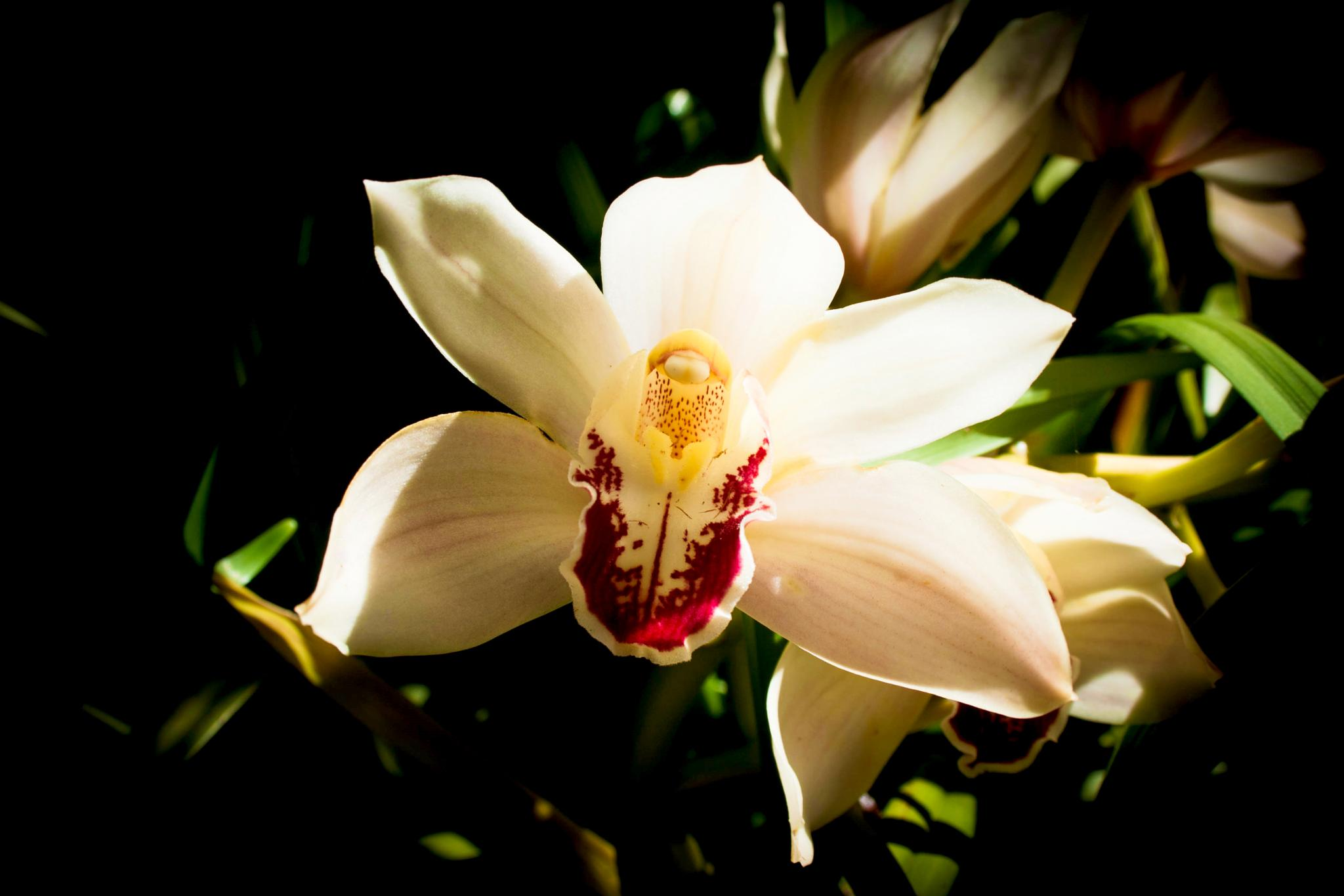 Photo in Random #flower #orchid