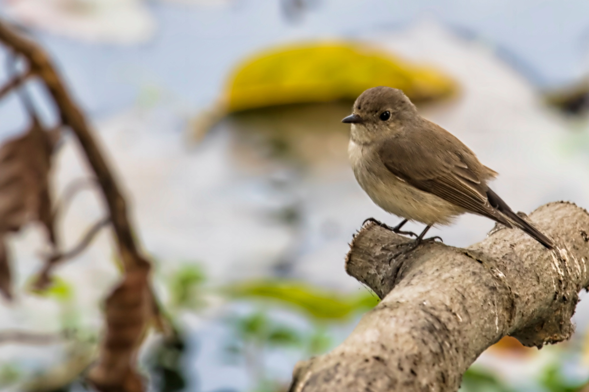 Little Bird by Arunkumar Banik