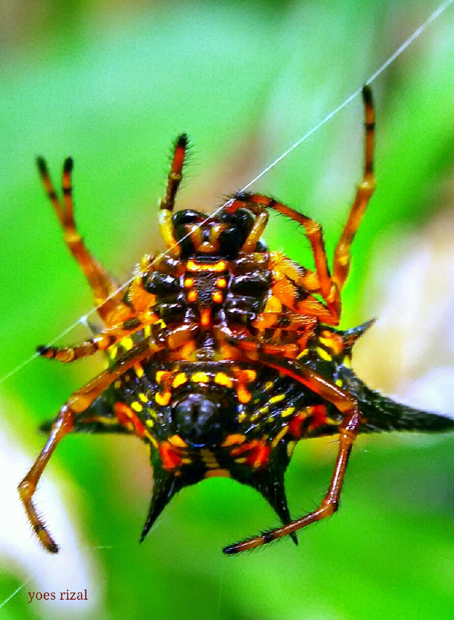 monster spider by yoes rizal