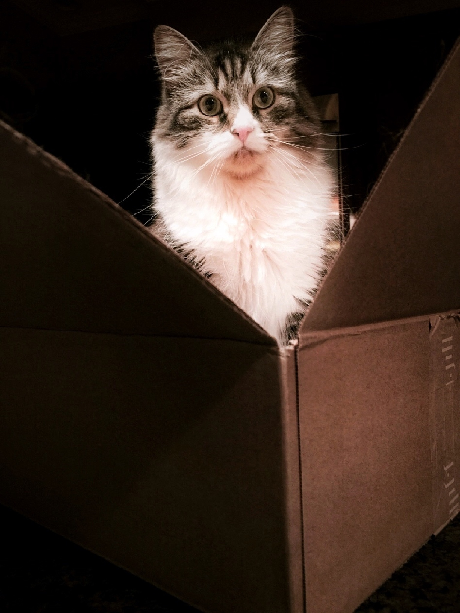 Back in the Box by Susan Wood