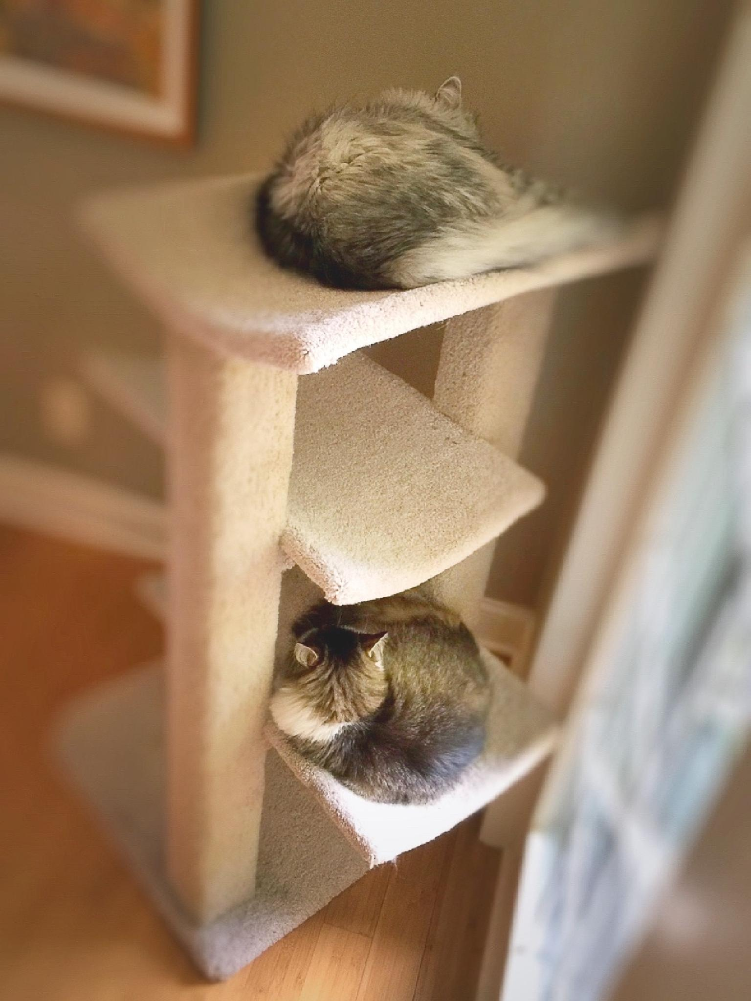 """Cat Nap Time at Hotel """"Catifornia"""" :) by Susan Wood"""