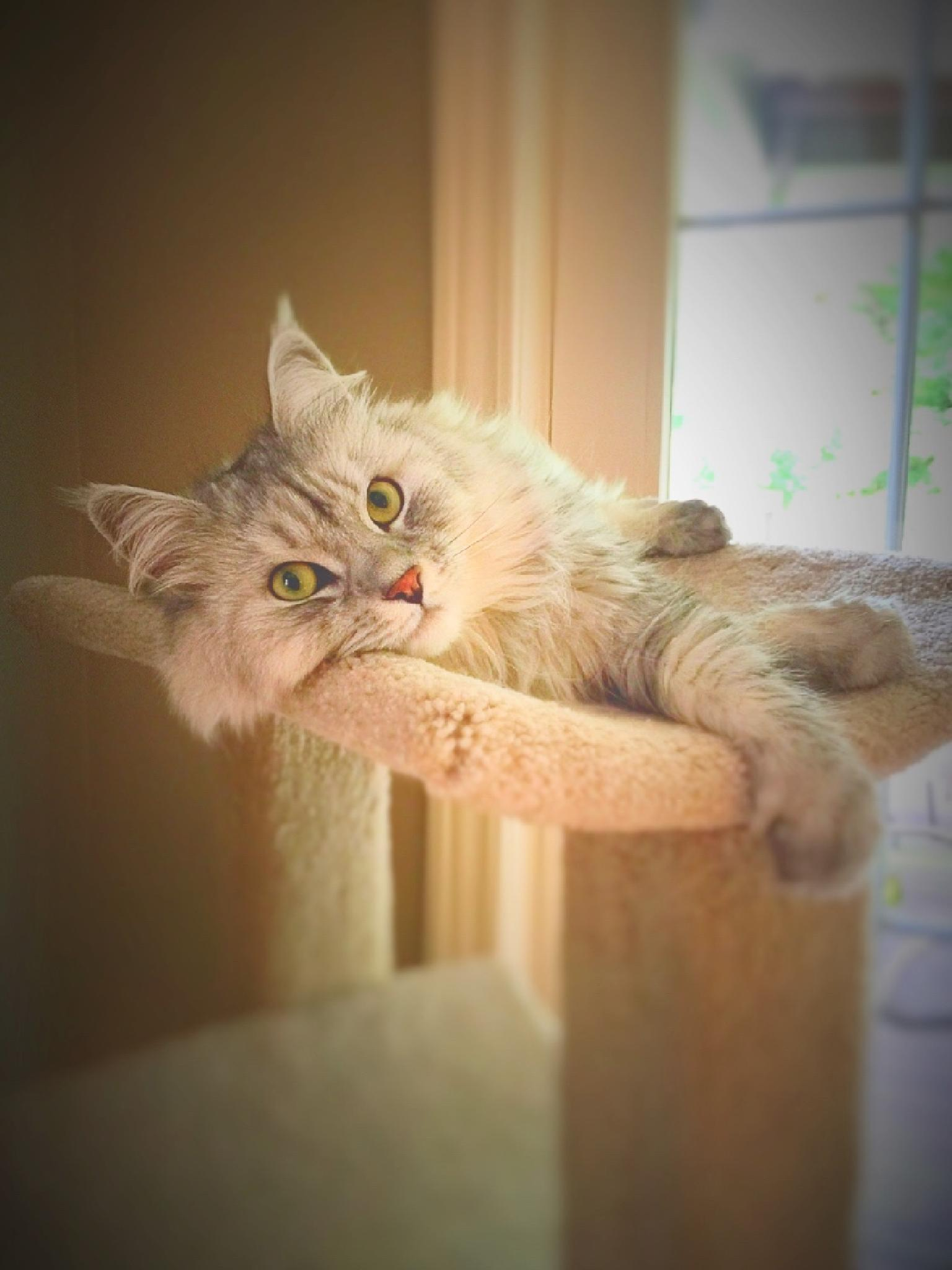 It's a Cat's Life by Susan Wood