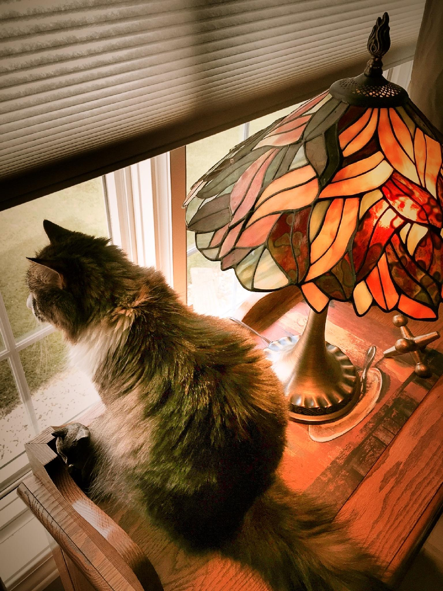 My Watch Cat by Susan Wood