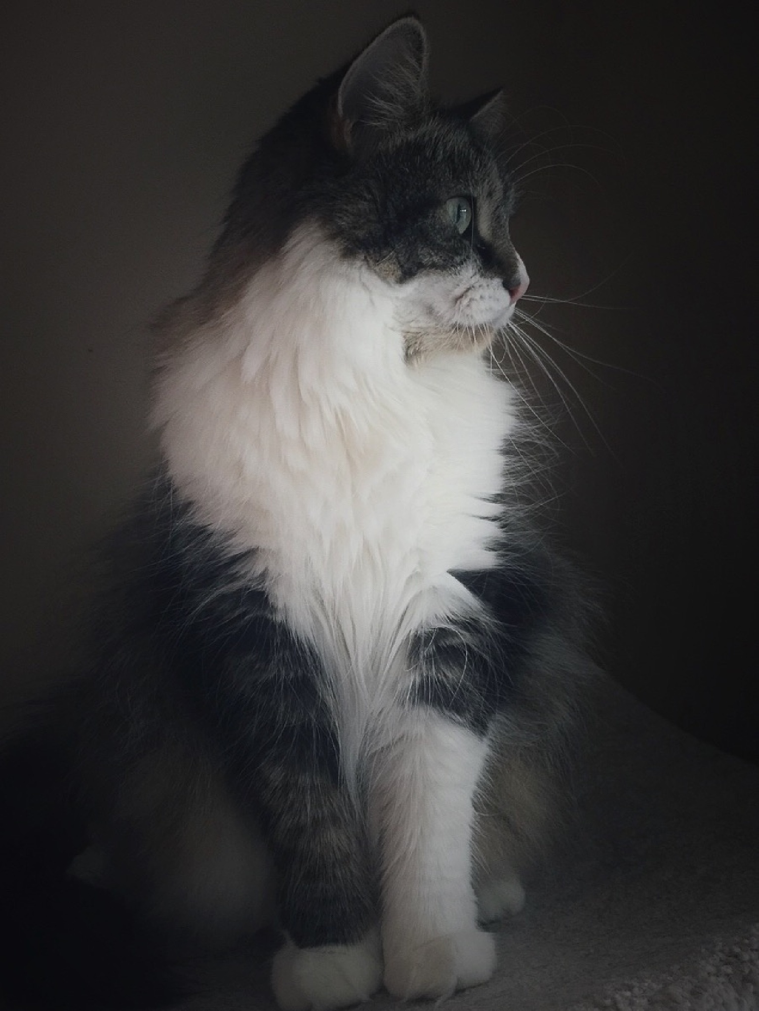 A Dreamy Portrait by Susan Wood