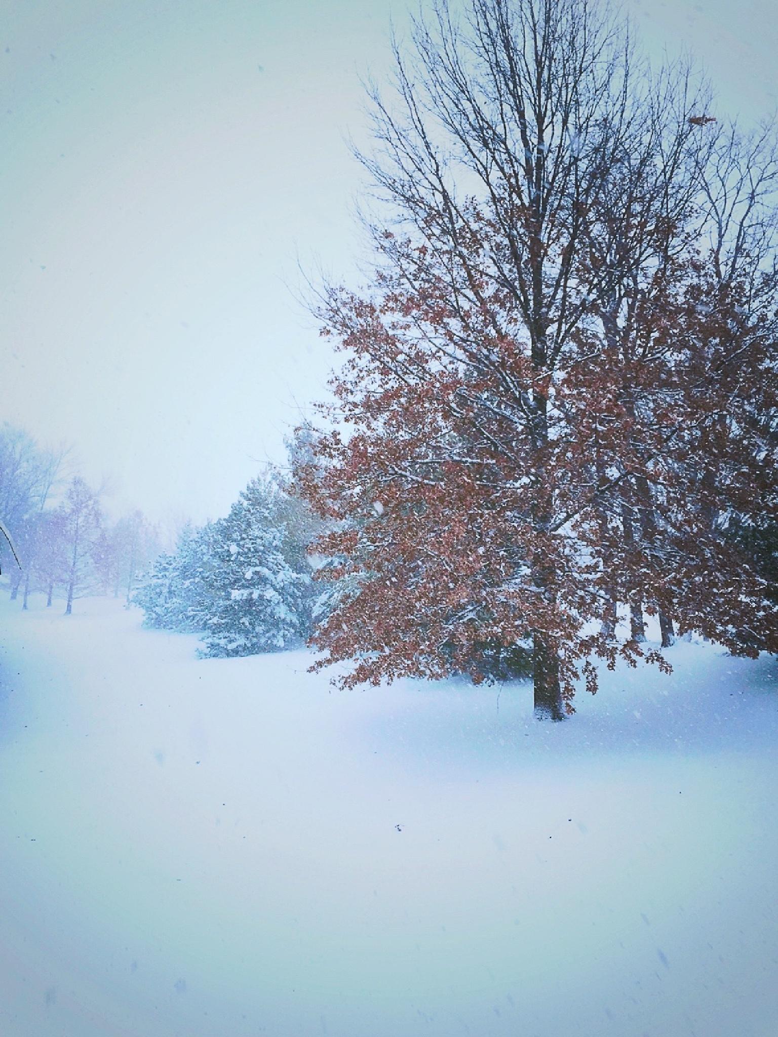 Snow Nostalgia  by Susan Wood