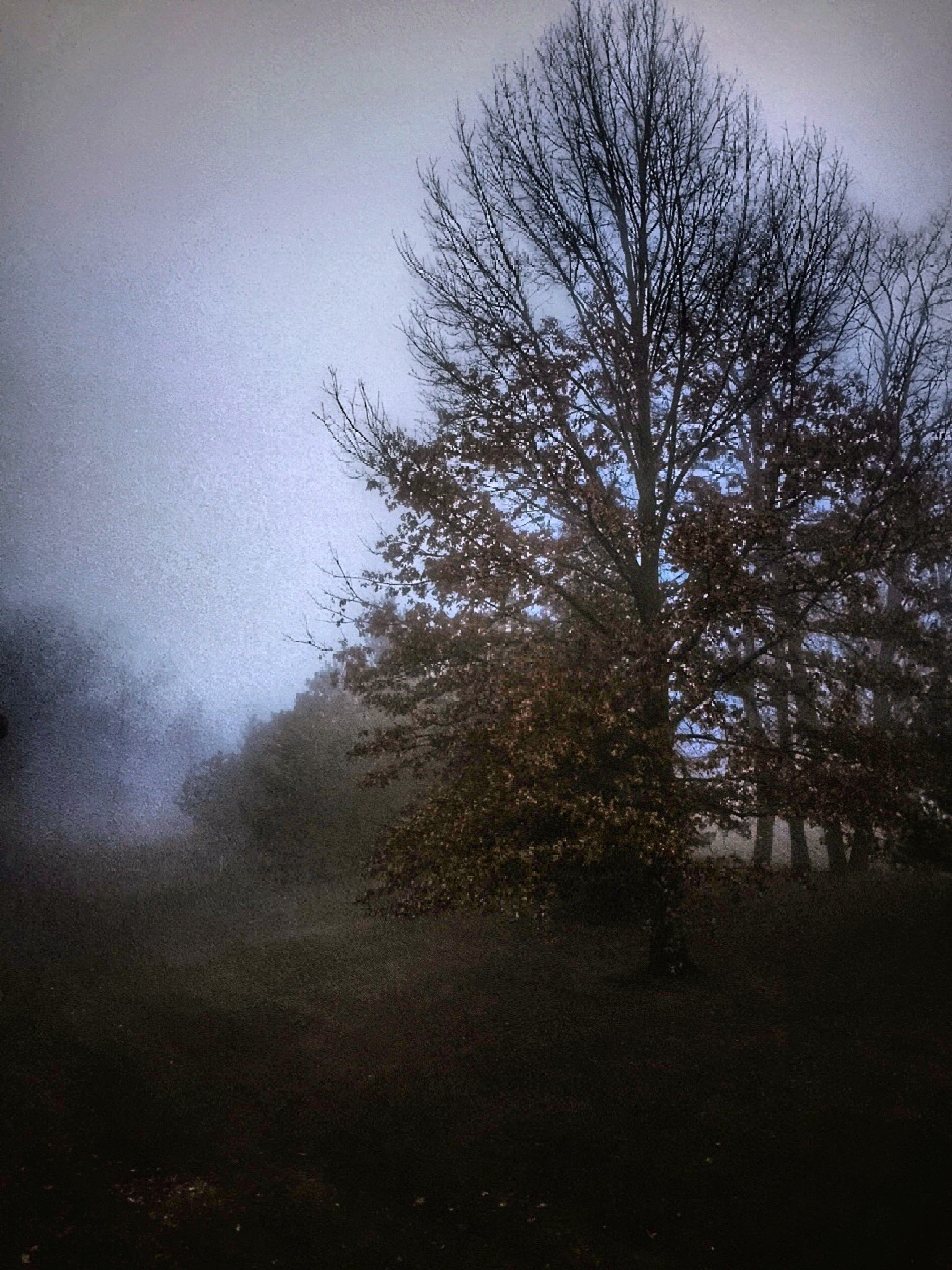 Draped in Fog by Susan Wood