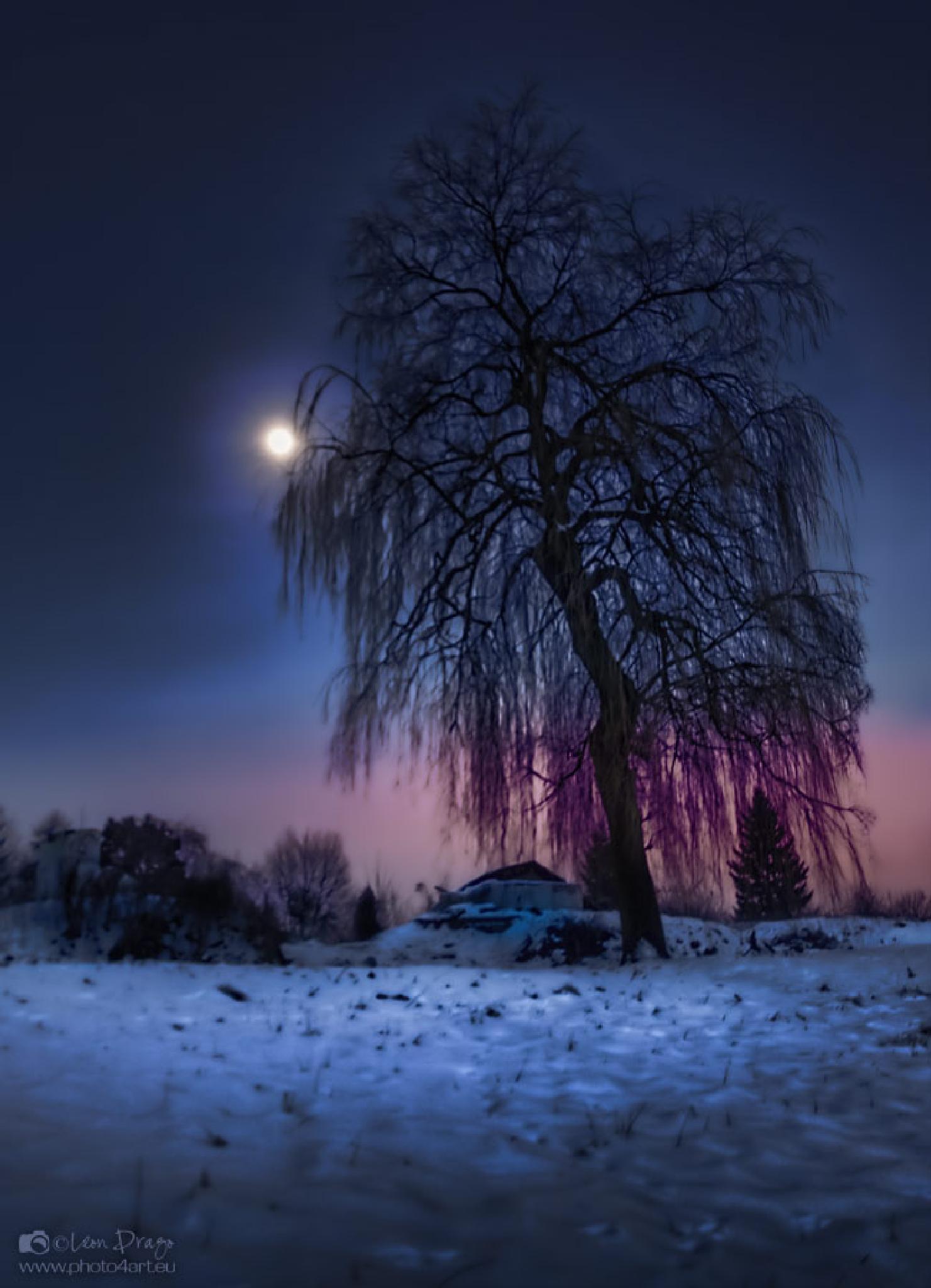 Night tree by Leon Drago