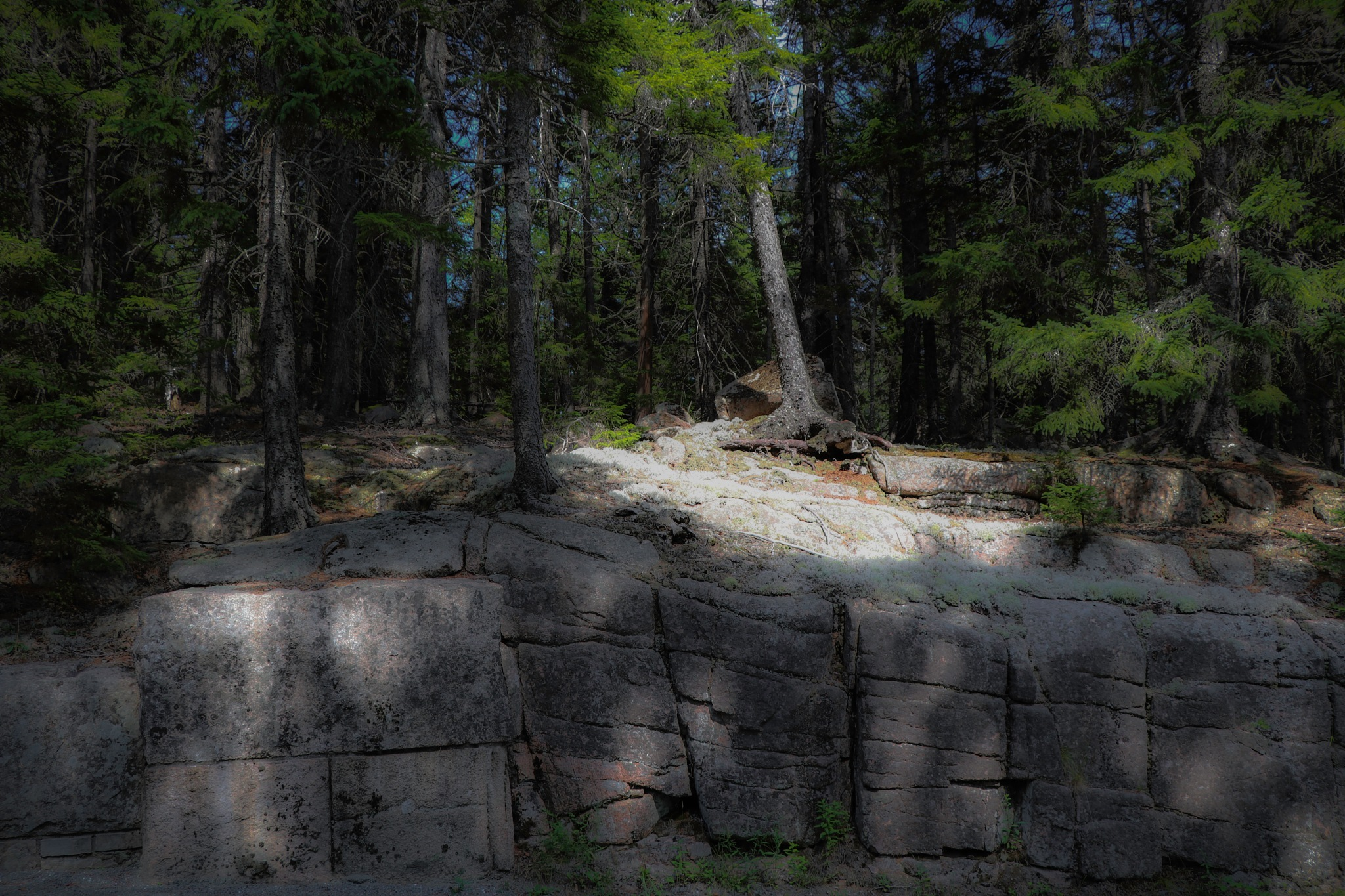Forest out of stone by Mark Hootman