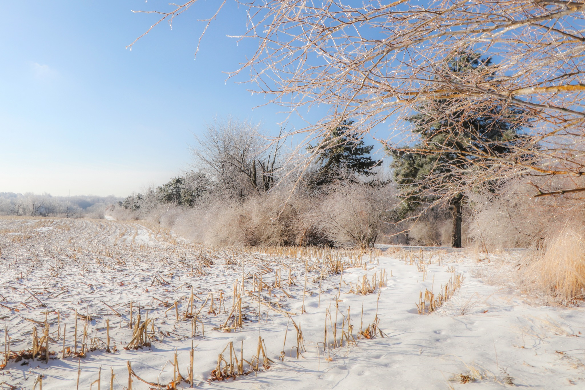 Winter Trees and Field by Mark Hootman