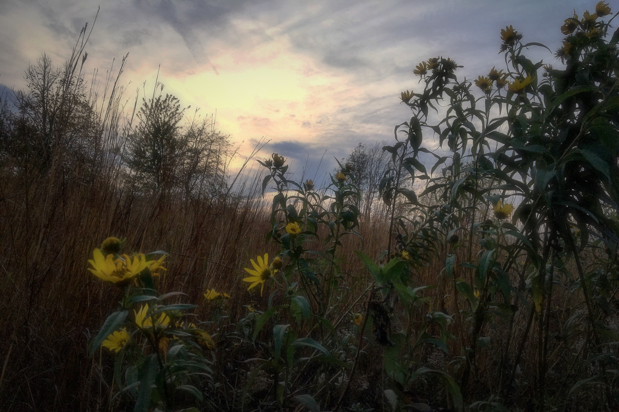Late Wildflowers by Mark Hootman