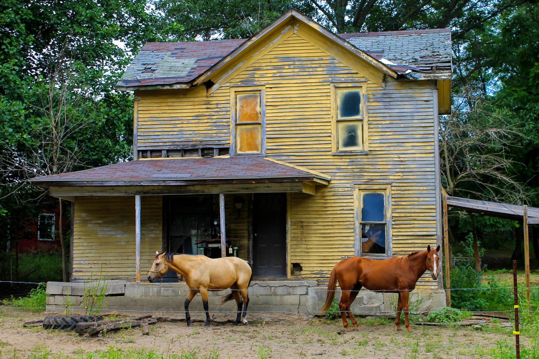 Photo in Rural #horses #old house #rundown #indiana