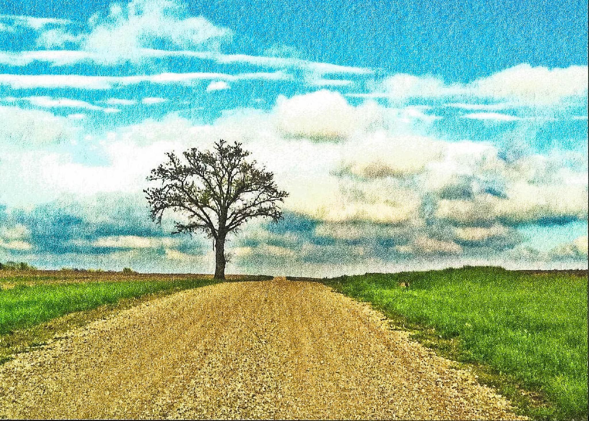 Tree on Wood Road (HDR) printed on watercolor paper by Mark Hootman