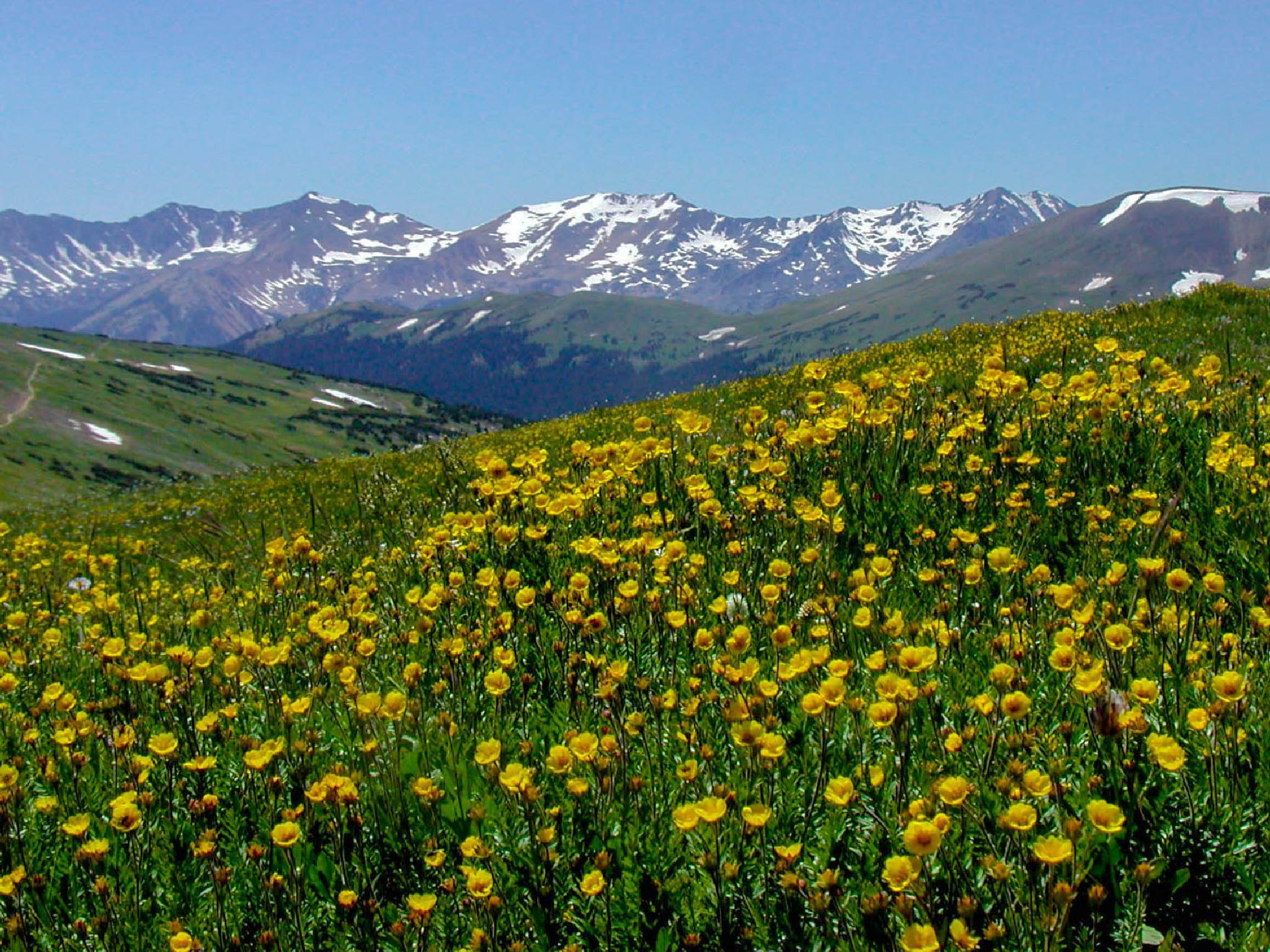Rocky Mountain Fields by Mark Hootman