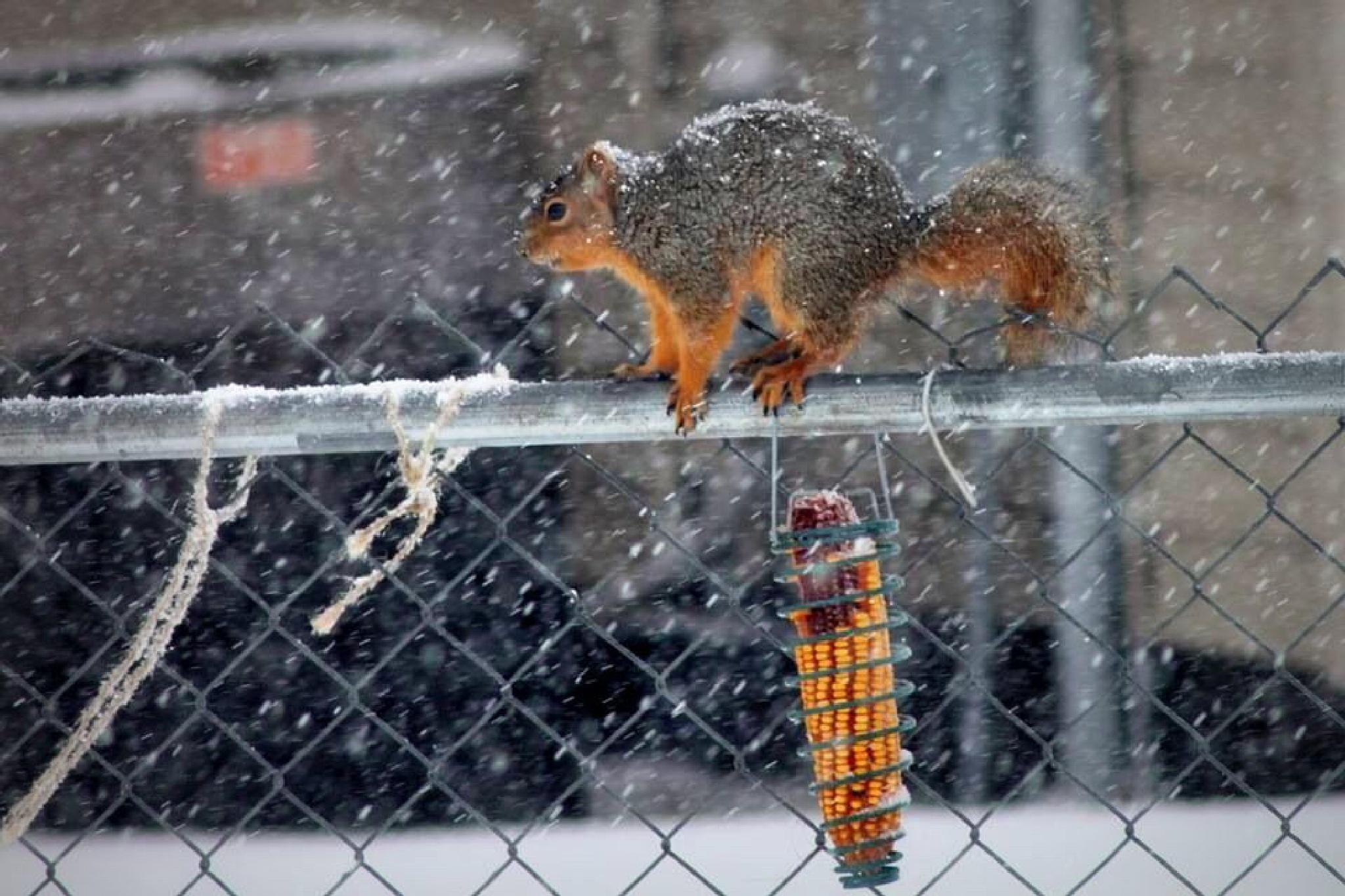 Winter corn by Mark Hootman