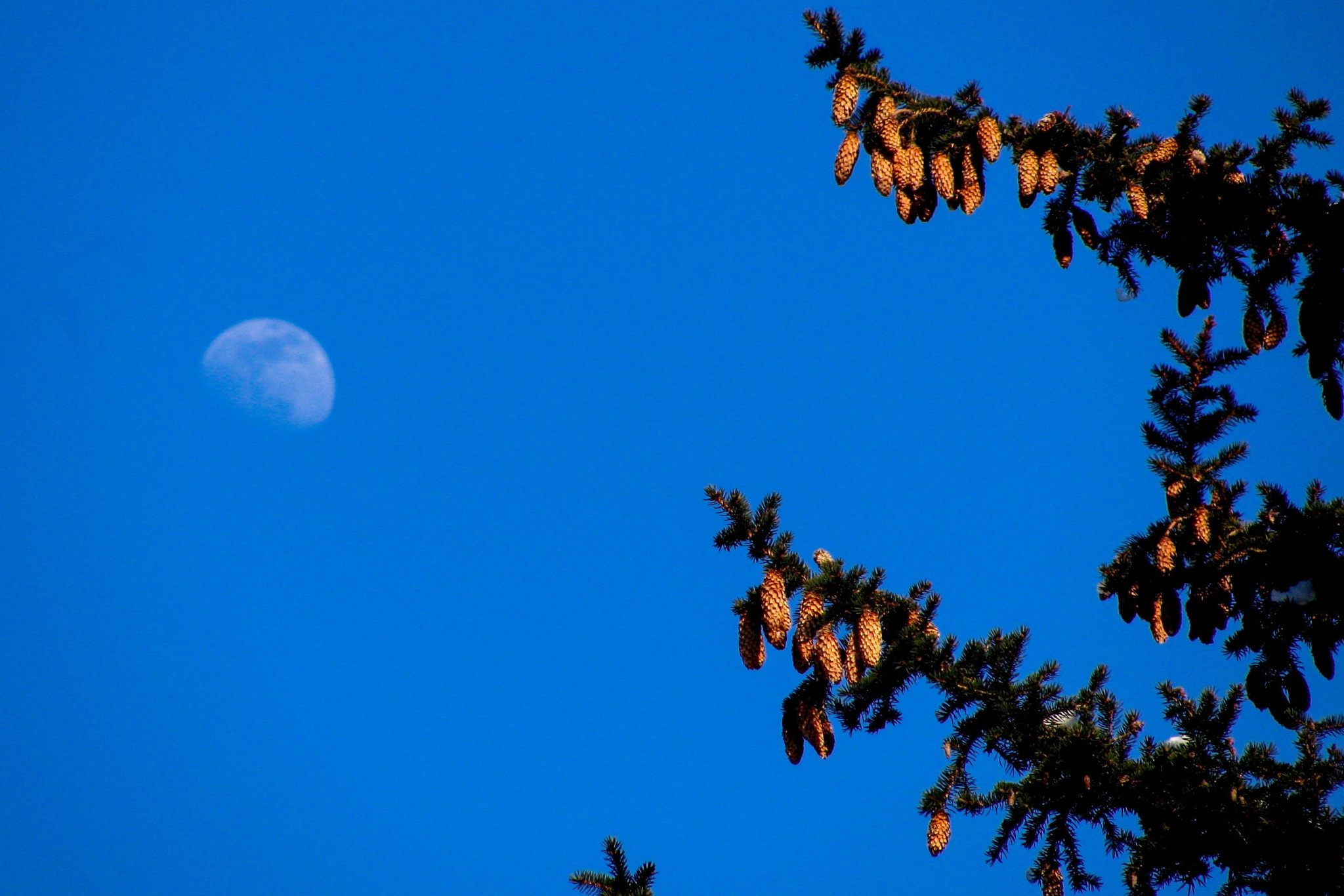 Winter Moon by Mark Hootman