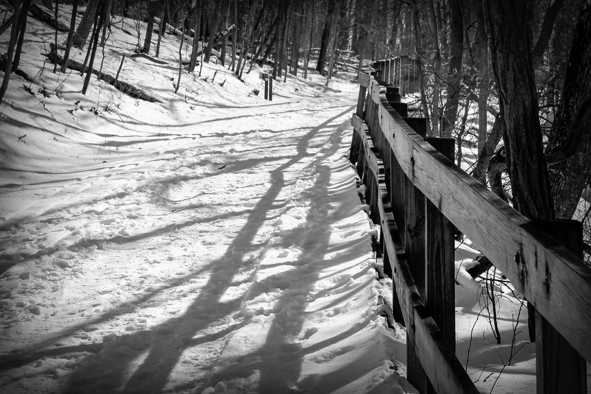 Snowy wooded trail by Mark Hootman