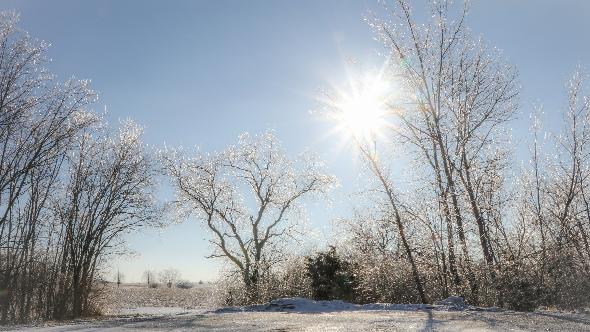 Photo in Nature #snow #trees #ice #sun #winter