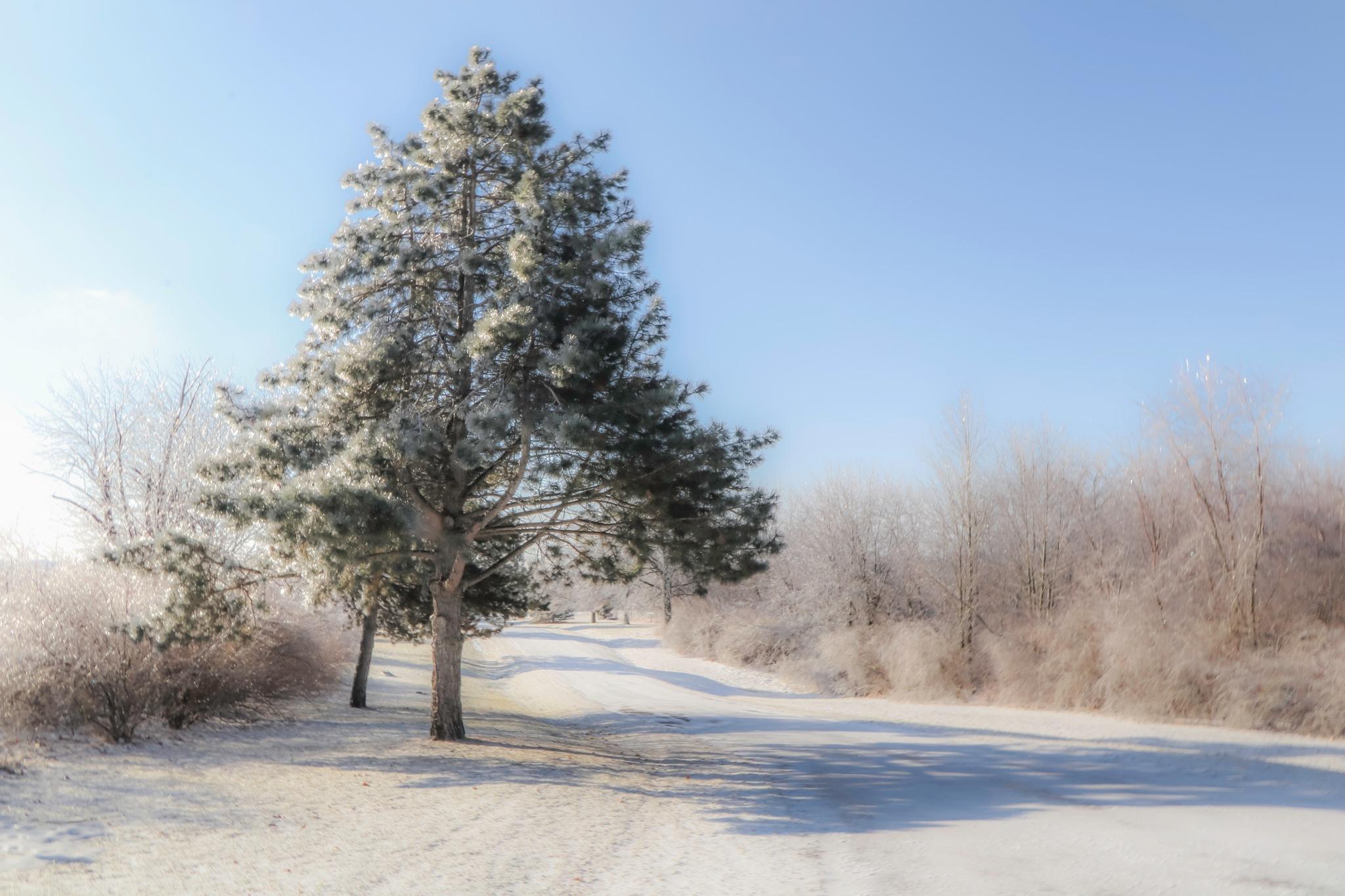 Winter Wonderland by Mark Hootman