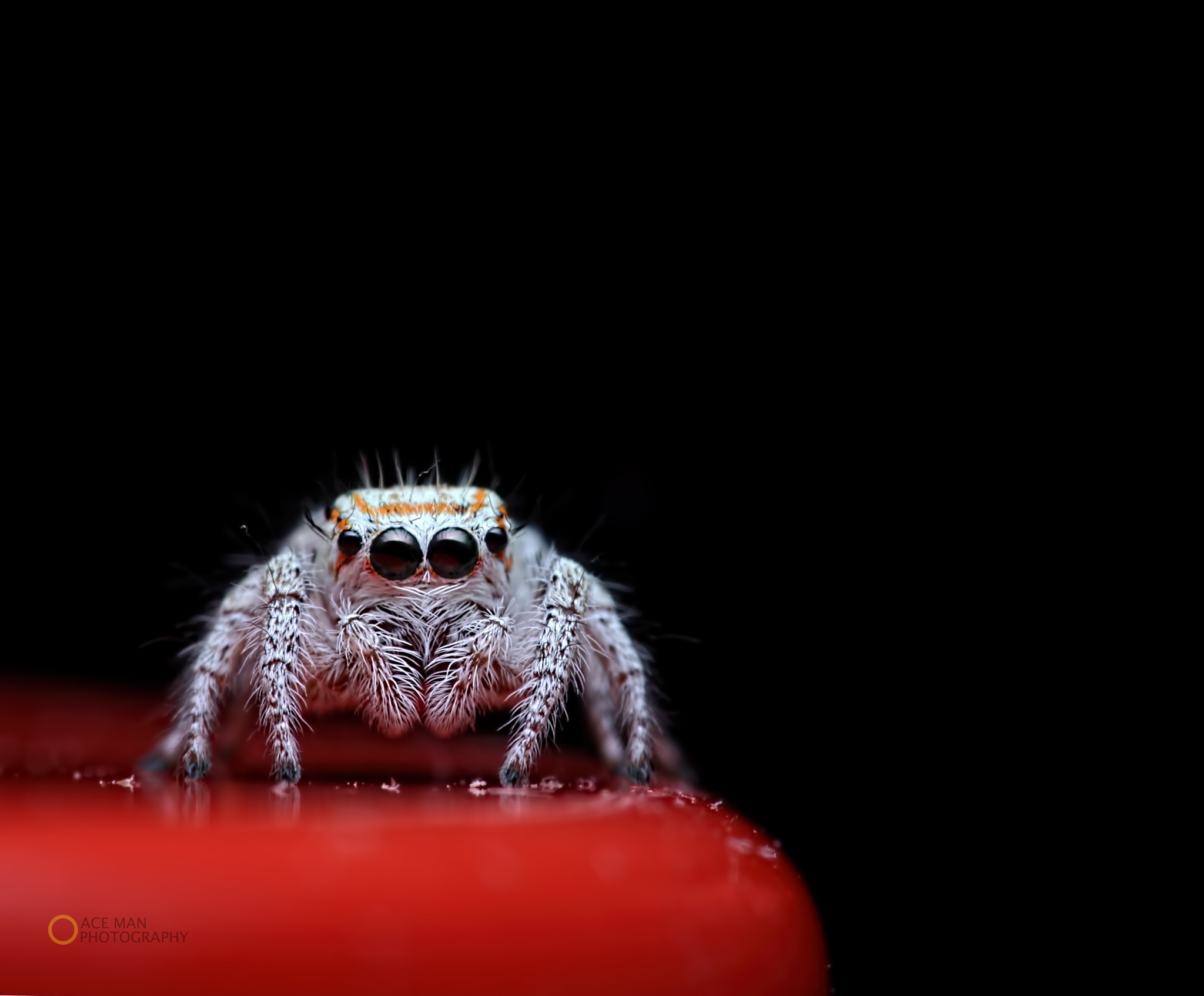 Tiny jumper !  by Ace Man